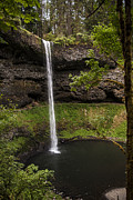 Leaf Tunnel Prints - South Silver Falls into the Pool Print by Darcy Michaelchuk