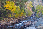 Colorado Greeting Cards Posters - South St Vrain Creek Autumn View Poster by James Bo Insogna