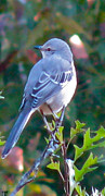 Pretty Colored Bird Photos - Southern Bird by Debra     Vatalaro