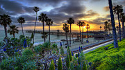 Palm Trees Framed Prints - Southern California Sunset Framed Print by Sean Foster