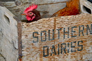 Milk Crate Prints - Southern chicken Print by Sue McGlothlin