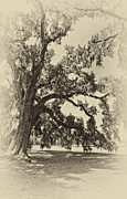 Evergreen Plantation Prints - Southern Comfort sepia Print by Steve Harrington