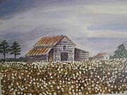 Old Barn Paintings - Southern Cottonfield by Anna Barnwell-Williams