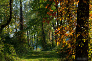 Southern Indiana Fall Colors Print by Melissa Wyatt