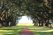 Pathways Photos - Southern Oaks and Sunshine by Carol Groenen