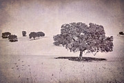 Oaks Photo Prints - Southern Oaks Print by Guido Montanes Castillo