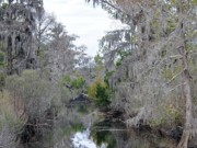 Al Powell Photography Usa Framed Prints - Southern Swamp Framed Print by Al Powell Photography USA