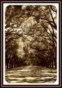 Oaks Framed Prints - Southern Welcome in Sepia Framed Print by Carol Groenen