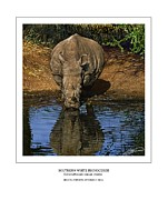 Rhinoceros Posters - Southern White Rhinoceros at Waterhole Poster by Owen Bell