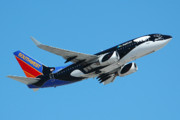 Airplane Prints - Southwest Boeing 737 Shamu at Sky Harbor April 13 2006 Print by Brian Lockett