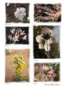 Judee Stalmack Framed Prints - Southwest Wildflower Collection #2 Framed Print by Judee Stalmack