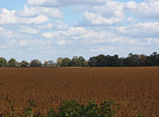 Harvest Time Posters - Soybean Fields in Limestone County Alabama Poster by Kathy Clark