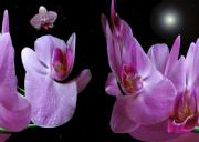 Flora Digital Art Originals - Space Station Orchid. by Terence Davis
