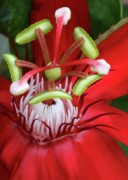 Passion Flower Photos - Space Station by Sabrina L Ryan