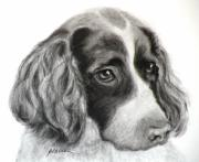 Charcoal Dog Drawing Drawings Posters - Spaniel Drawing Poster by Susan A Becker