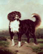 Paws Painting Prints - Spaniel Print by JW Morris
