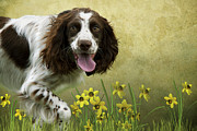 Spaniel With Daffodils Print by Ethiriel  Photography