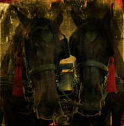 Chaise Photo Prints - Spanish Carriage Horses Print by Lee Dos Santos