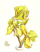 Yellow Drawings - Spanish Irises by Kip DeVore