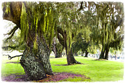 Grass Roots Prints - Spanish Moss at Jekyll Island Print by Debra and Dave Vanderlaan