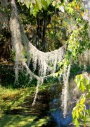 Swampland Metal Prints - Spanish Moss over the Swamp Metal Print by Carol Groenen