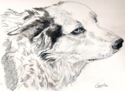 Border Drawings - Sparkie by Janet Lavida