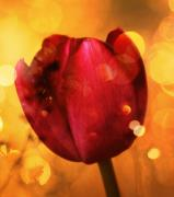 Mauve Digital Art Posters - Sparkle of the Tulip Poster by Cathie Tyler