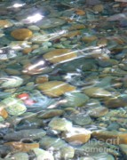 Rocks Posters - Sparkling Water on Rocky Creek Poster by Carol Groenen