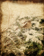 Pine Digital Art Framed Prints - Sparrow In Winter I - Textured Framed Print by Angie McKenzie