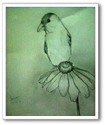 Foqia Zafar - Sparrow on flower