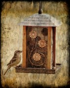 Feeder Greeting Cards Posters - Sparrow On The Feeder Poster by Angie McKenzie