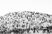 Sparse Acrylic Prints - Sparse Mountain Forest In Norwegian Winter Acrylic Print by Raphael Schneider