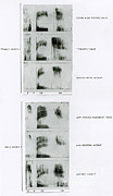 Analyze Prints - Spectrograms Of The Word Speech Print by Science Source