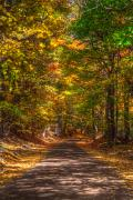 Autumn Trees Photo Prints - Speechless Print by Robert Pearson