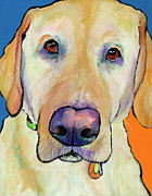 Yellow Dogs Framed Prints - Spenser Framed Print by Pat Saunders-White