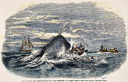 1851 Photos - Sperm Whale Attack, 1851 by Granger