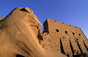 Stonewall Prints - Sphinx and the first pylon entrance at sunset at Karnak Temple Print by Sami Sarkis