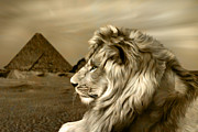 Lion Art - Sphinx by Julie L Hoddinott