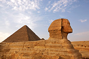Profile Photo Posters - Sphinx of Giza Poster by Jane Rix