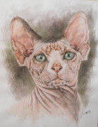 Hairless Paintings - Sphynx by Barbara Keith