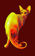 Hairless Digital Art Posters - Sphynx Cat Poster by Jane Schnetlage