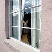 Naked Cat Prints - Sphynx Sitting in Window Print by Glennis Siverson