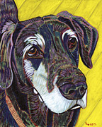 Dog Portraits Posters - Spice of Life Poster by David  Hearn