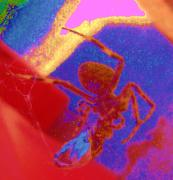 Abstracted Photo Framed Prints - Spider and Prey Abstracted Framed Print by Beth Akerman