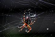 Insects And Crawley Things - Spider by David Lane