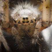 Insects - Spider Eyes by Darcy Michaelchuk