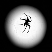 Spider In The Moon Print by Val Armstrong