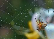 Spider Print by Jean Noren