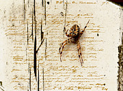 Creepy Digital Art Metal Prints - Spider Letter Metal Print by Yvon -aka- Yanieck  Mariani