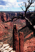 National Park Service Prints - Spider Rock Print by Thomas R Fletcher